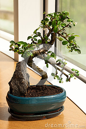 Free Bonsai Front Window Stock Photos - 47828523