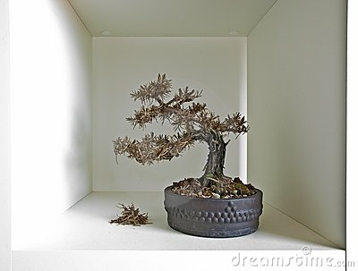 Bonsai shelf III