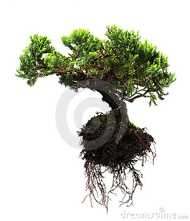 Free Bonsai Tree Royalty Free Stock Photo - 10305275