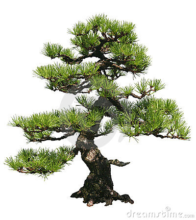 Free Bonsai Tree Stock Photography - 10978592