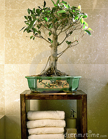 Bonsai tree in bathroom