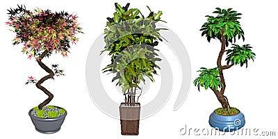 Bonsai tree illustrations