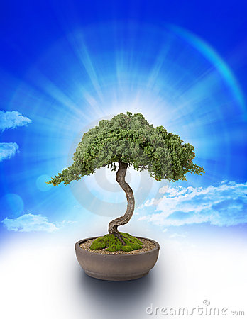 Free Bonsai Tree Knowledge Sky Stock Image - 15838071
