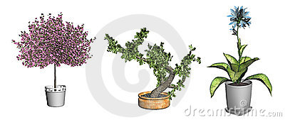 Bonsai tree and plants