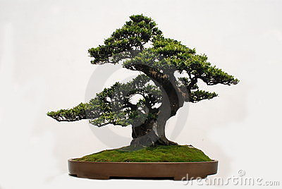 Bonsai of Yaccatree