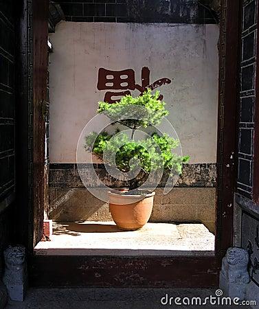 Free Bonzai Tree Royalty Free Stock Image - 1312696