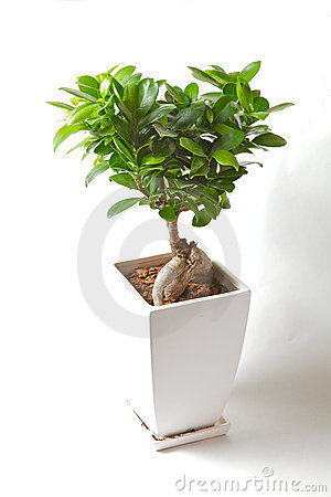 Free Bonzai Tree Stock Image - 21961191