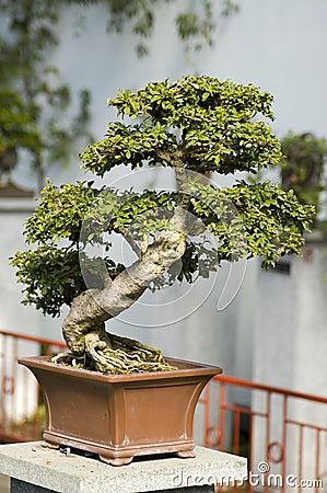 Free Bonzai Tree Stock Image - 5796631