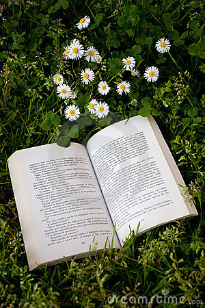 Book and daisies