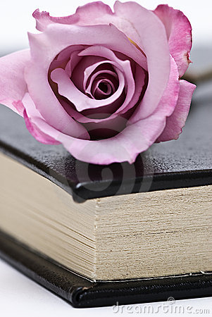 A book and a pink rose.