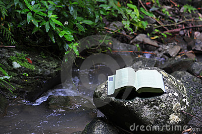 Book in rainforest