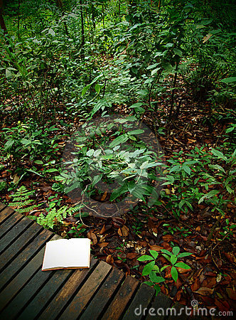 Book on rainforest trail, nature background