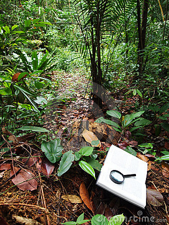 Book in tropical rainforest