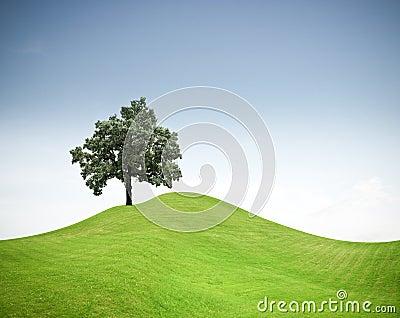 Boom op een groene grasheuvel