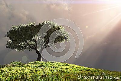 Boom op heuvel met stralen van licht