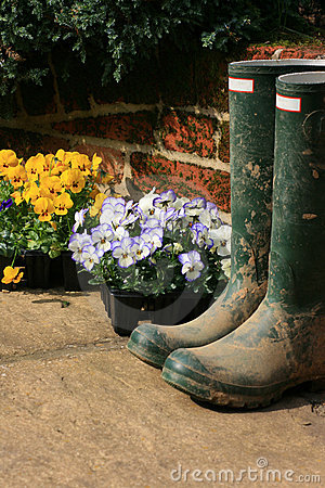 Free Boots And Pansies Stock Photo - 8661350