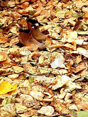 Boots surrounded with leaves