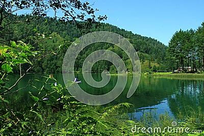 Borçka Lake-2