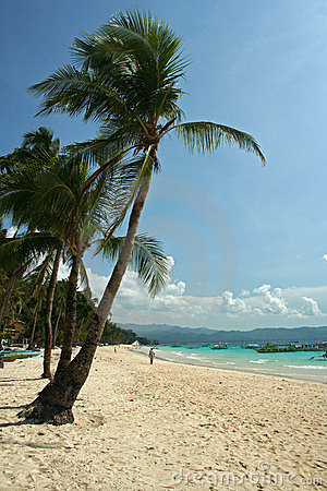 Boracay island beach and palm trees