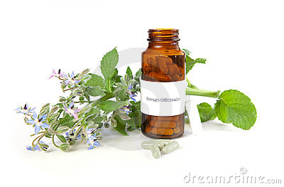 Borage herbal medicine