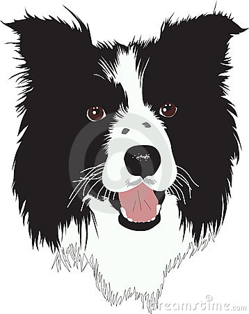 Border Collie dog - Illustration
