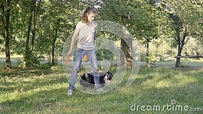 Border Collie pokazuje trikowemu kłębieniu wokoło nóg dziewczyna treser w parku słoneczny dzień, zwolnione tempo strzelanina zdjęcie wideo