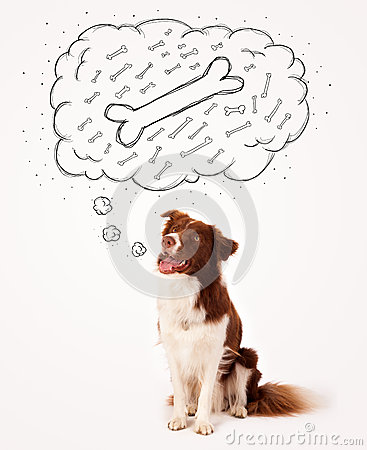 Border collie with thought bubble thinking about a bone Stock Photo