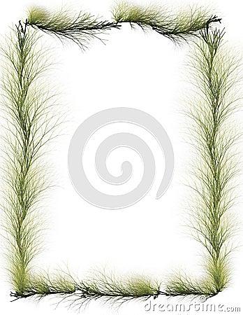 Border: Evergreen Branches