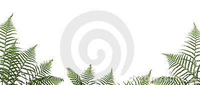 Border of ferns
