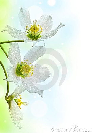 Free Border From Dewy Spring Flowers Royalty Free Stock Photos - 22764098