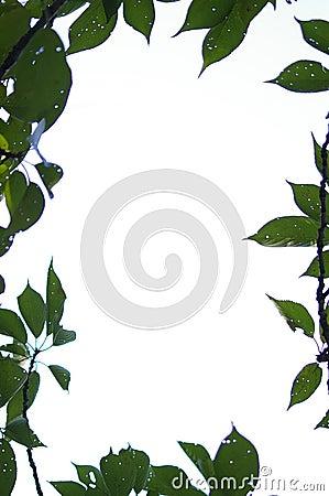 Border of leaves