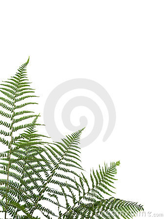 Free Border Of Ferns Stock Images - 5332064