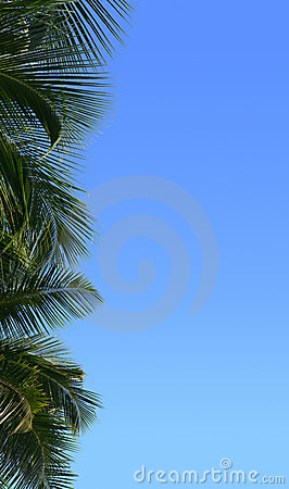 Border of palm tree