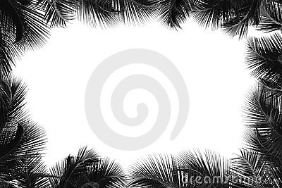 Border of palm tree
