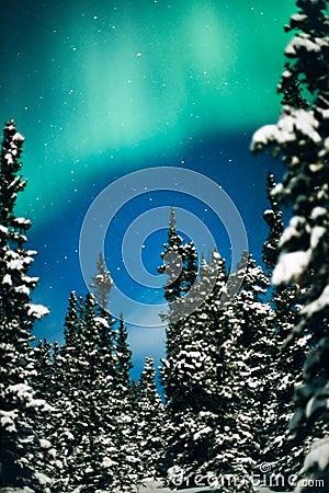 Borealis dell aurora, degli indicatori luminosi nordici e foresta di inverno
