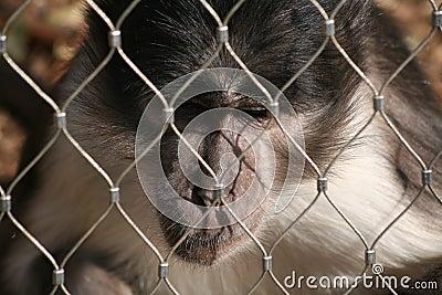 A bored monkey