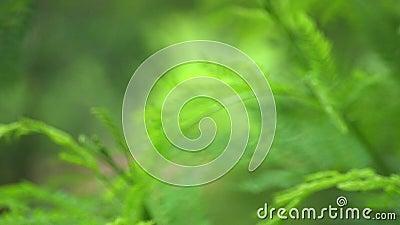 Borrão do ramo verde video estoque