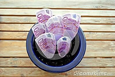 Bos van 500 Euro nota s die in een pot groeien