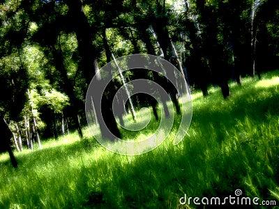 Bos van dromen