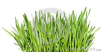 Bosje van gras