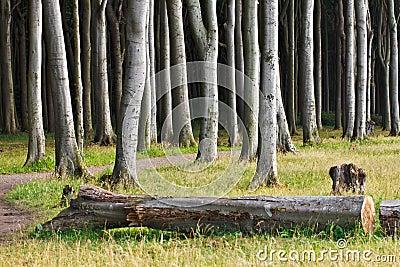 Bosque costero