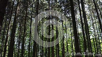 Bosque danés con el sol en el fondo metrajes