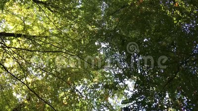 Bosque danés en otoño metrajes