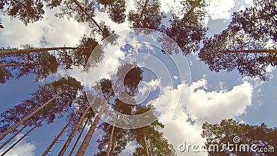Bosque de debajo almacen de metraje de vídeo