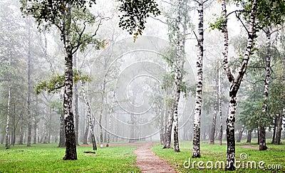 [Kiri] - Bosque de Kiri Bosque-do-vidoeiro-da-manh%C3%A3-na-n%C3%A9voa-profunda-do-outono-26604858