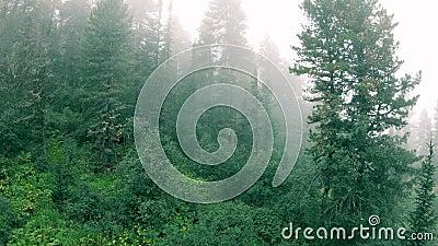 Bosque en la niebla y el sendero almacen de metraje de vídeo