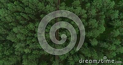 Bosque en Lituania. Bosque de Pinewood verde cerca de Vilna, capital de Lituania 8 metrajes