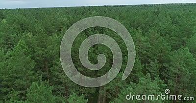 Bosque en Lituania. Bosque de Pinewood verde cerca de Vilna, capital de Lituania 7 metrajes