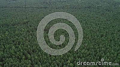 Bosque en Lituania. Bosque de Pinewood verde cerca de Vilnius, capital de Lituania. 5 almacen de video