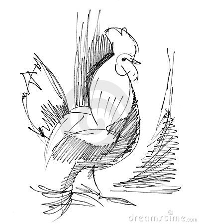 Bosquejo del gallo